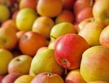 Photo of Cox Apples