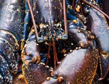 Cromer lobster