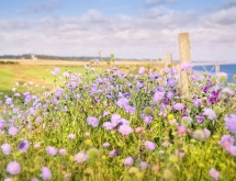 Flowers on the North Norfolk Coast